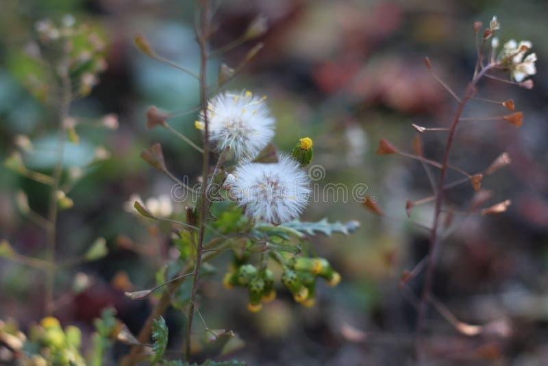Прошлой осенью травы ждут холод стоковое фото
