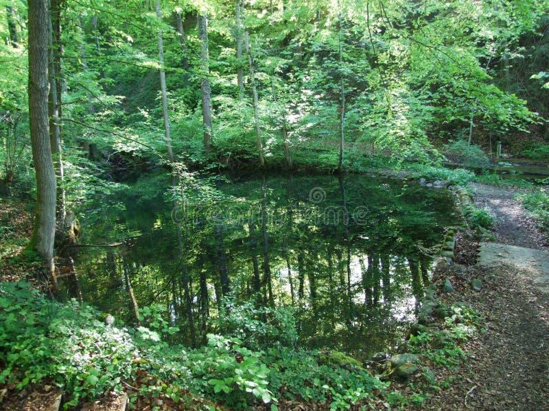 Пруд лесом в Gossau стоковое изображение