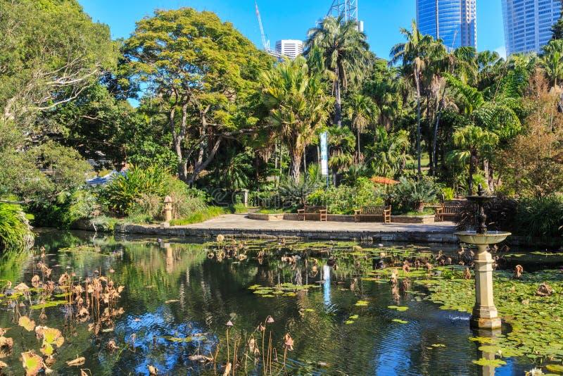 Пруд лотоса в королевском ботаническом саде, Сидней, Австралия стоковая фотография