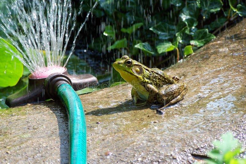 пруд лягушки стоковое изображение
