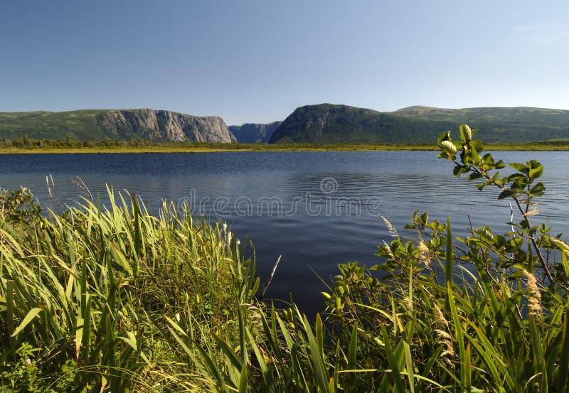 пруд ручейка западный стоковое изображение rf