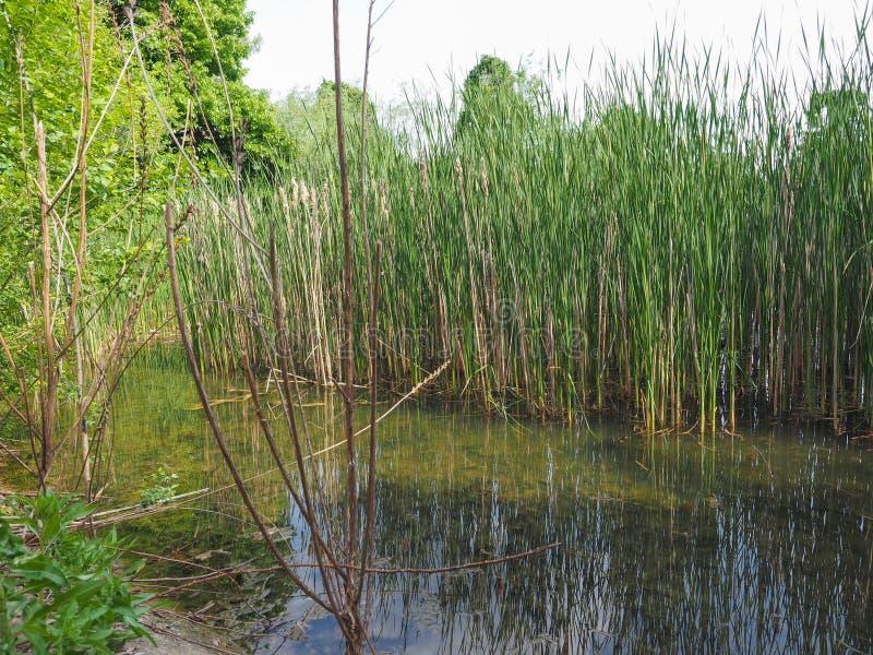 пруд с аквариумными растениами стоковая фотография
