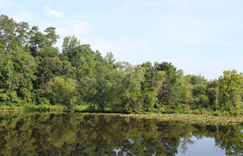 Пруд с деревьями и lillys стоковая фотография rf