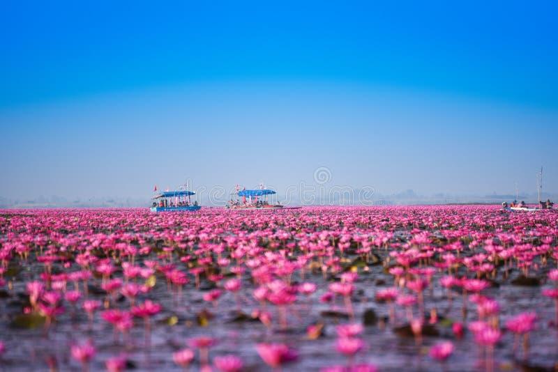 Пруд цвета озера лотос Udon Thani ориентир ориентира красный стоковая фотография