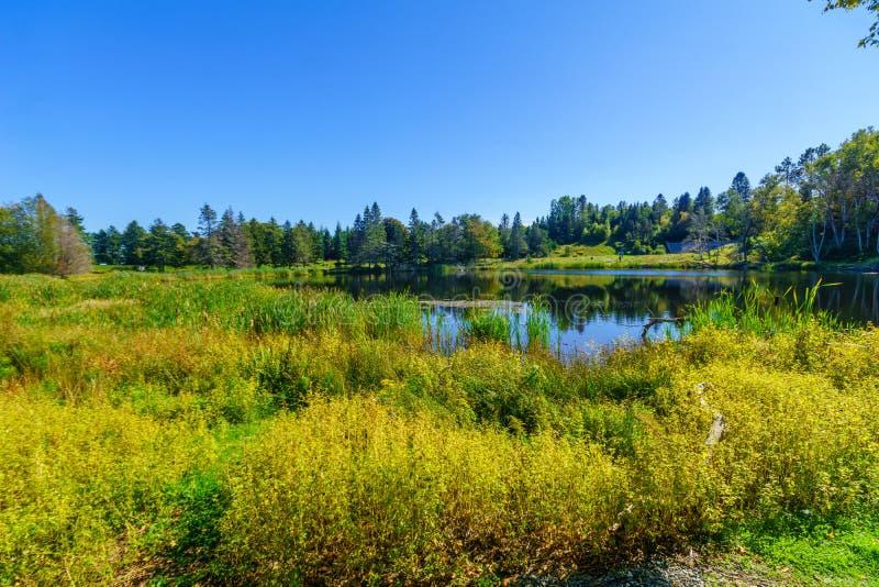 Пруд MacLaren, в национальном парке Fundy стоковые фото