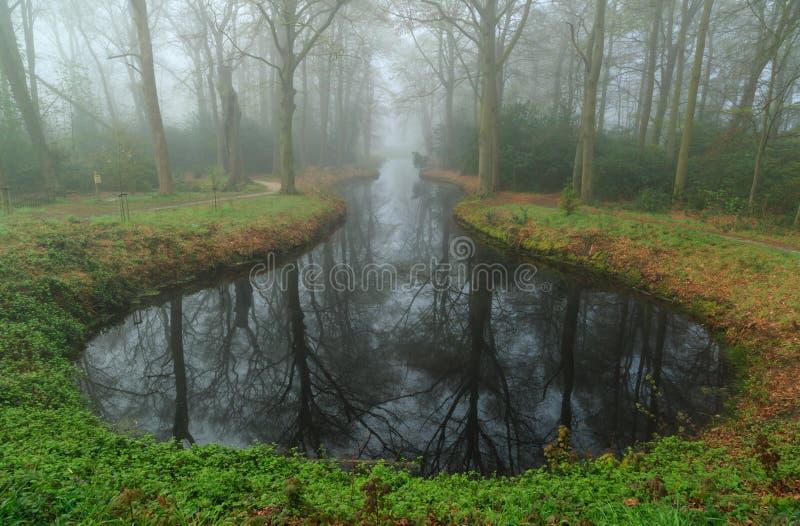 Пруд в тумане стоковое фото rf