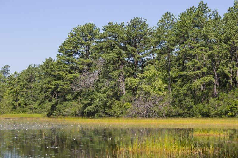 Пруд прибрежной равнины лета травянистый на ясный день стоковые фото