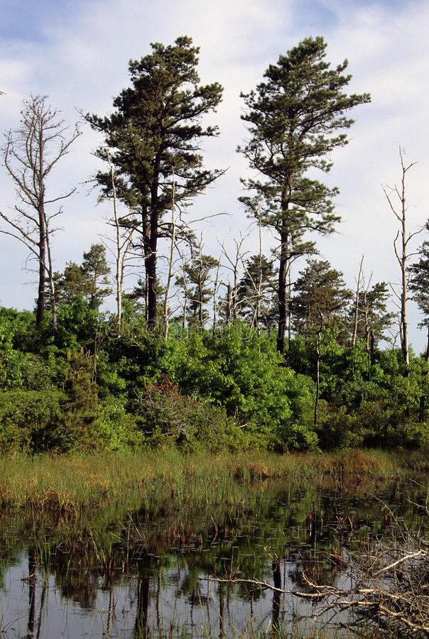 Пруд прибрежных равнин стоковое фото