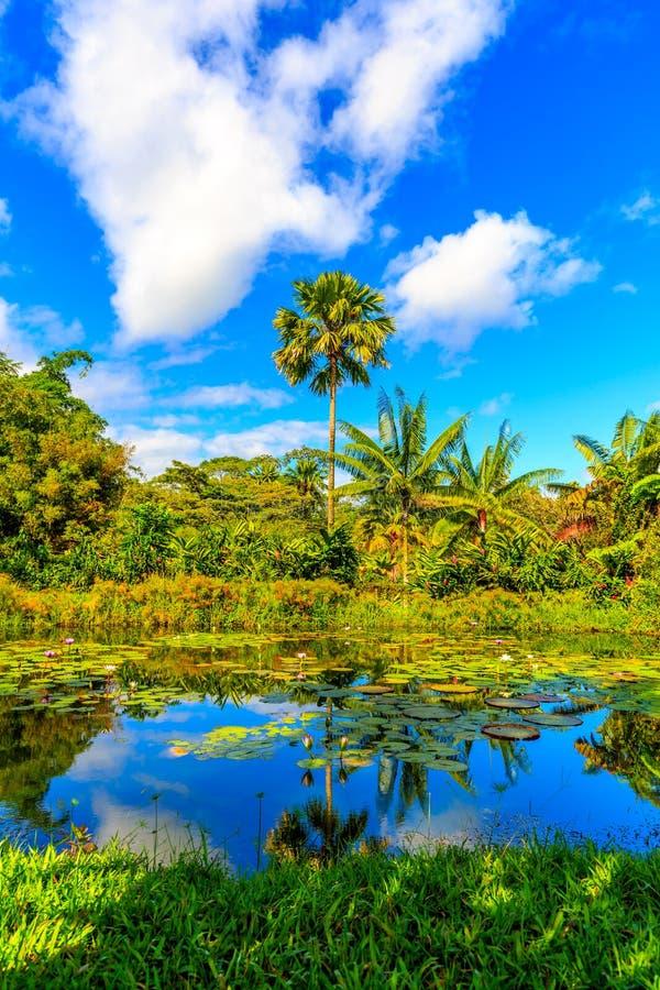 пруд тропический стоковое фото rf