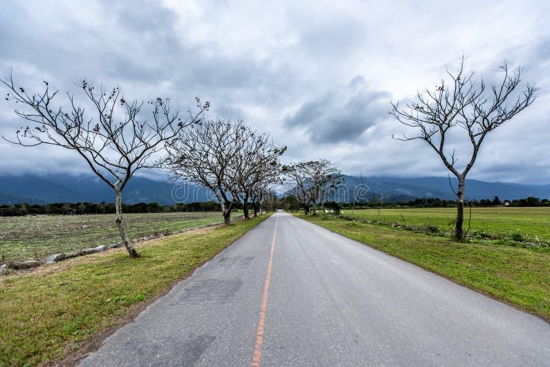 Прямая дорога выровнянная с деревьями стоковое изображение rf