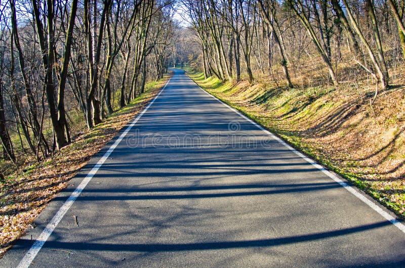 Прямая дорога леса на предыдущей весне стоковые изображения rf