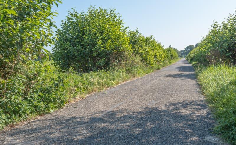 Прямой и плоский путь цикла стоковая фотография
