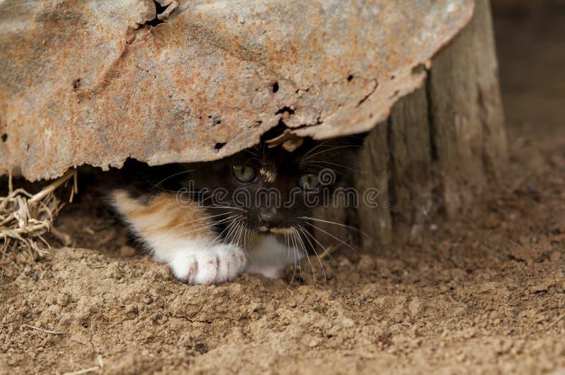 Download Прятать котенка стоковое изображение. изображение насчитывающей aztecan - 40588005