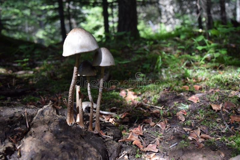 Психоделические грибы в диком стоковые изображения rf