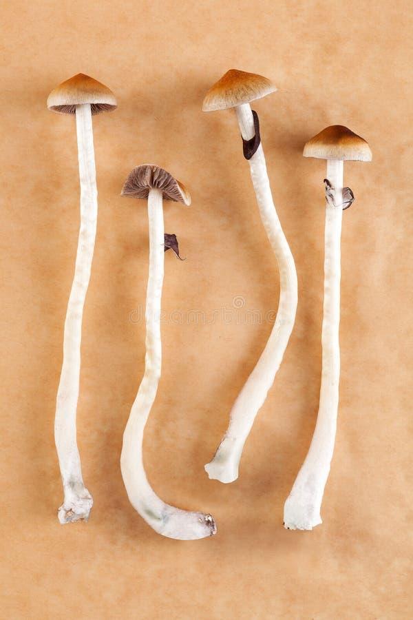 Психоделические волшебные грибы стоковые фото