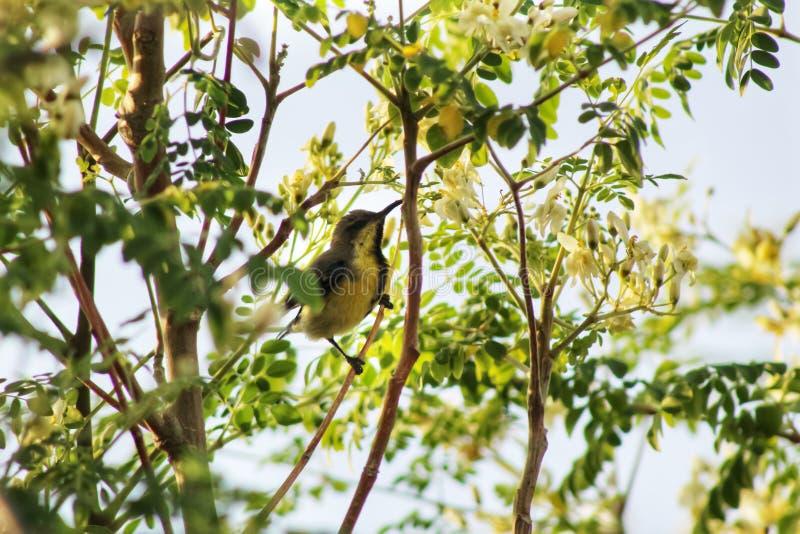 Птаха в дереве пытается достать еду стоковые фотографии rf