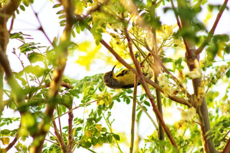 Птаха, похоже, пытается съесть стоковая фотография