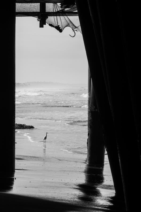 Птица баклана на океане стоковое фото rf