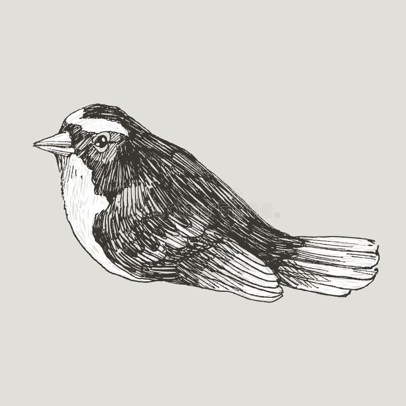 Птица векторной графики нарисованная рукой на ретро графическом стиле Чертеж чернил, винтажный стиль Милая птица для вашего дизай бесплатная иллюстрация