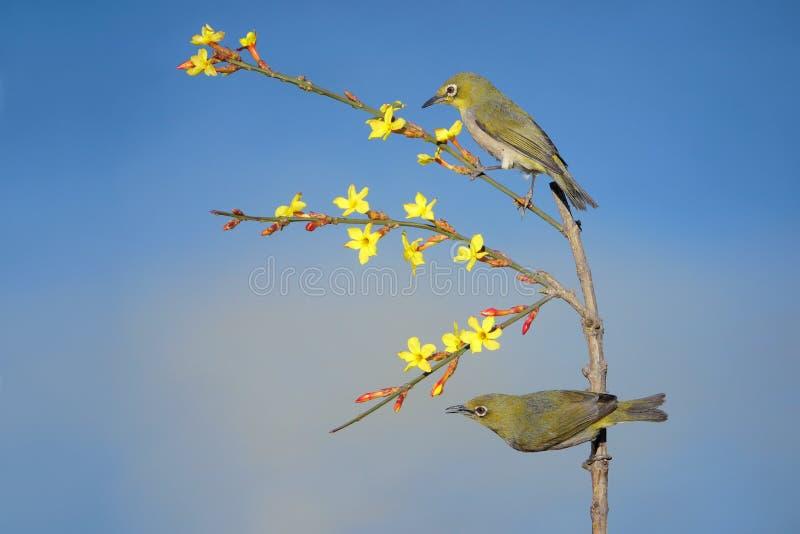 Птица весной стоковая фотография rf