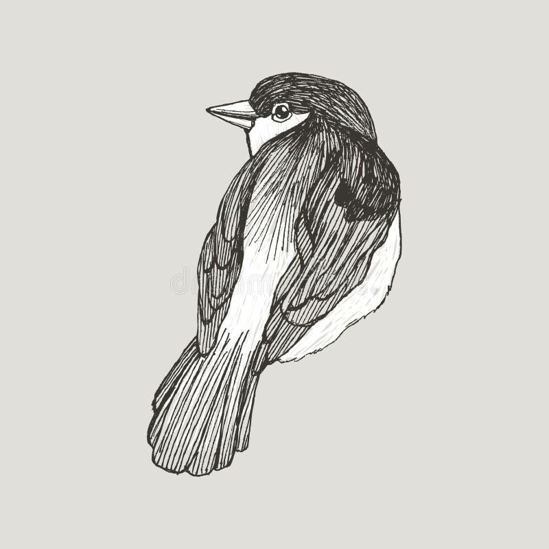 Птица воробья векторной графики нарисованная рукой на ретро графическом стиле Чертеж чернил, винтажный стиль Милая птица для ваше иллюстрация штока
