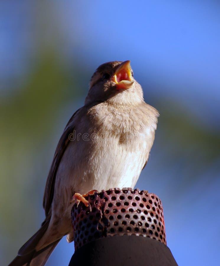 птица вызывая факел газа стоковые фотографии rf