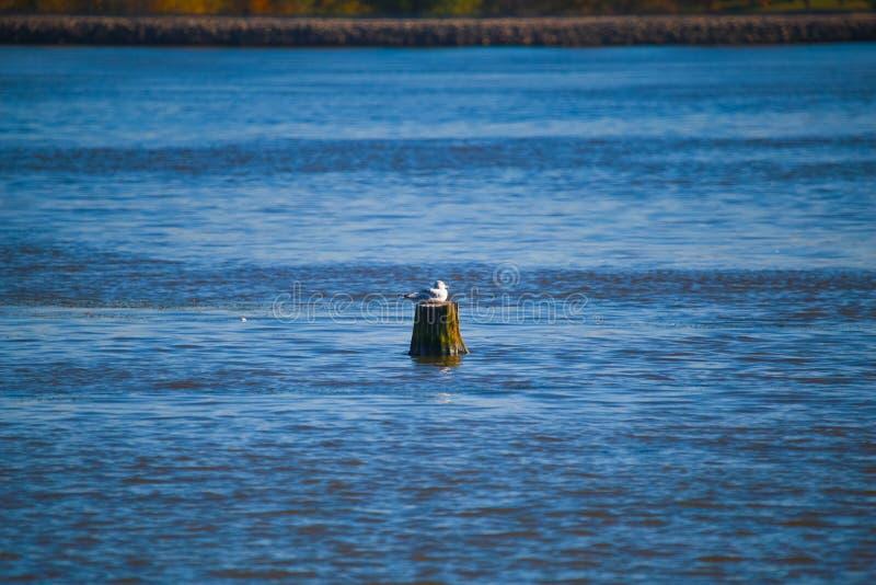 Птица в воде стоковые фото
