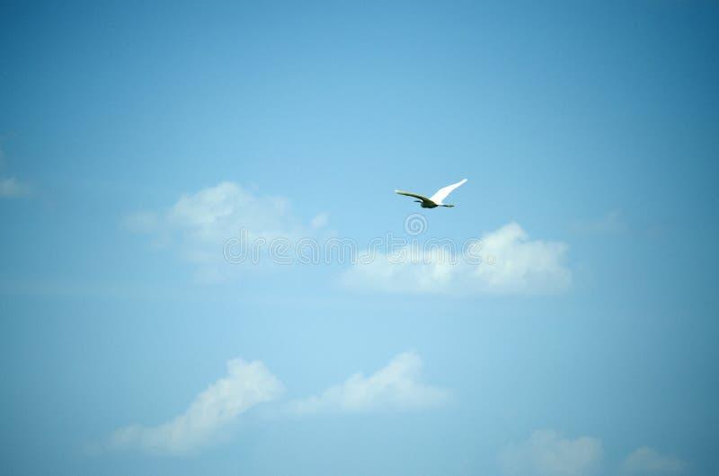 Птица в голубом небе стоковые изображения rf