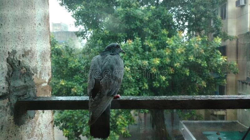 Птица в дожде стоковое фото