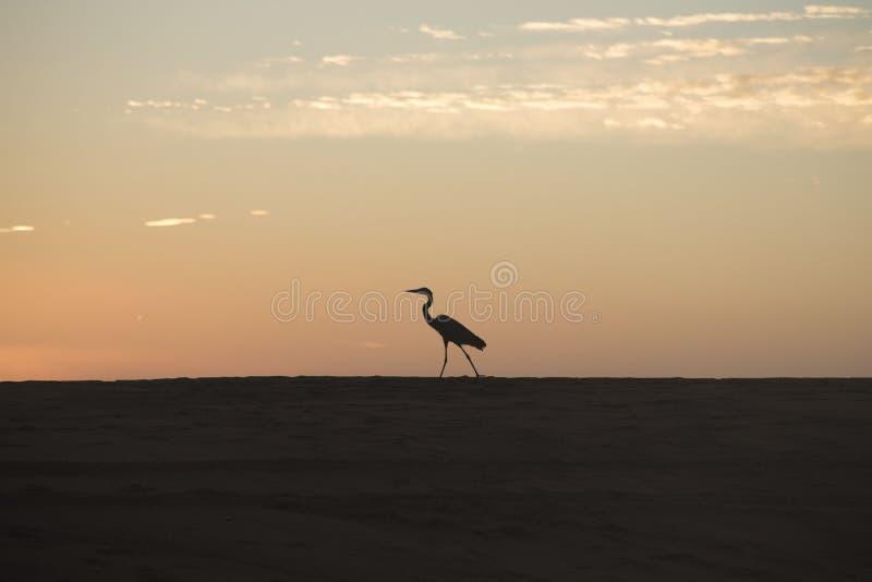 Птица в заходе солнца стоковое фото rf