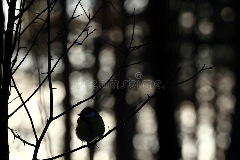 Птица в лесе зимы стоковые изображения rf