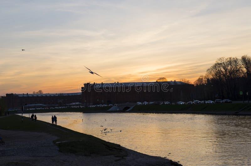 Птица в небе на заходе солнца над рекой в городе стоковые фотографии rf