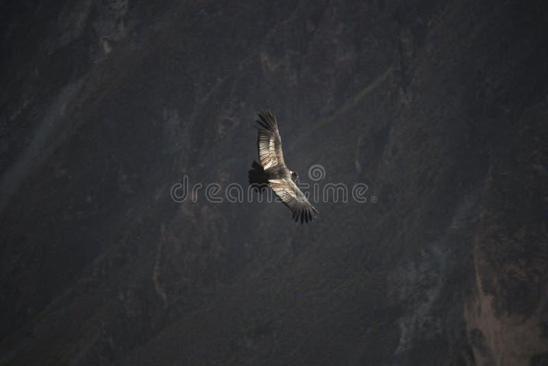 Птица в полете стоковое фото rf