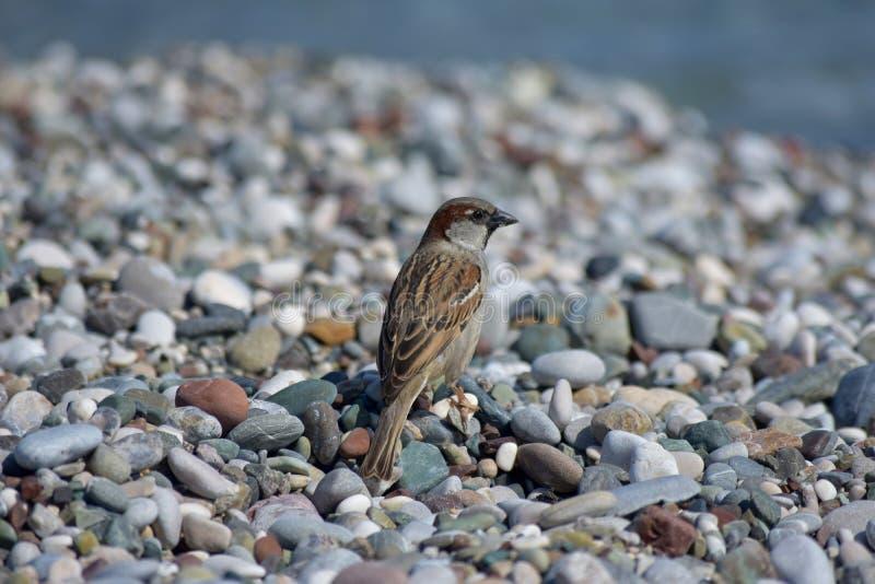 Птица в пустом пляже стоковые изображения rf
