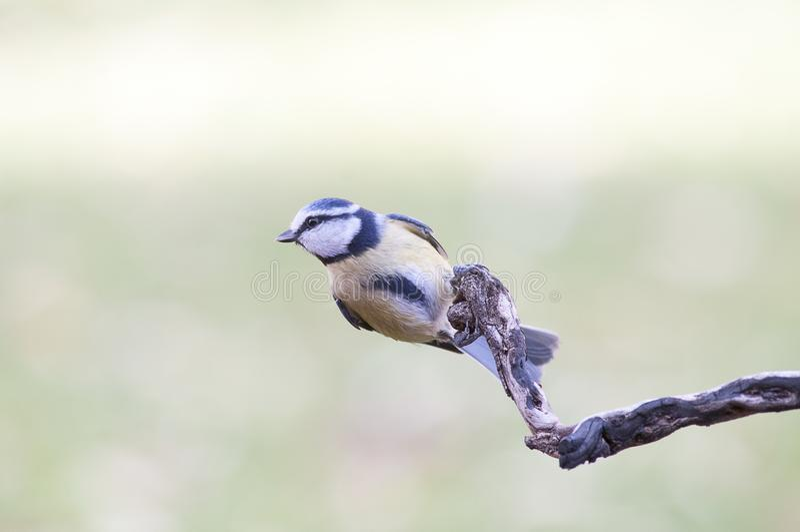 Птица в своем innkeeper около лететь стоковое фото