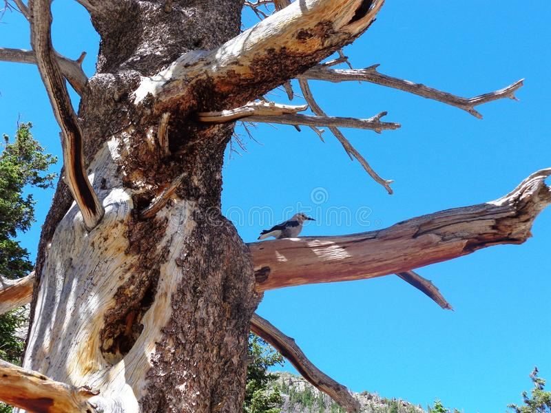 Птица в скалистых горах стоковое изображение rf