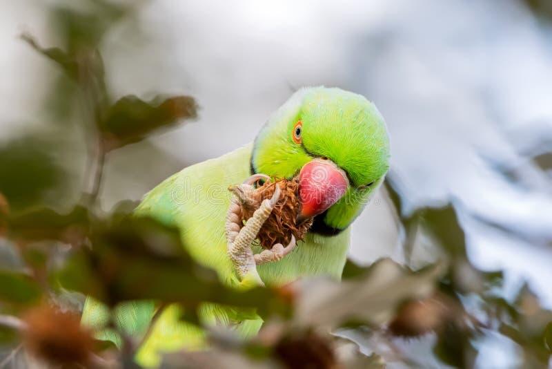 Птица в среду обитания стоковое изображение