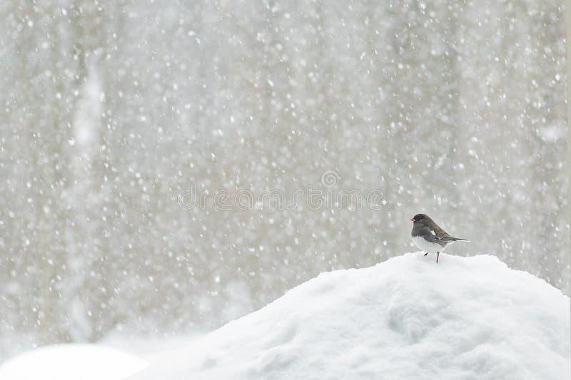 Птица в шторме снега стоковое фото rf