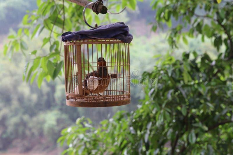птица в birdcage стоковое изображение