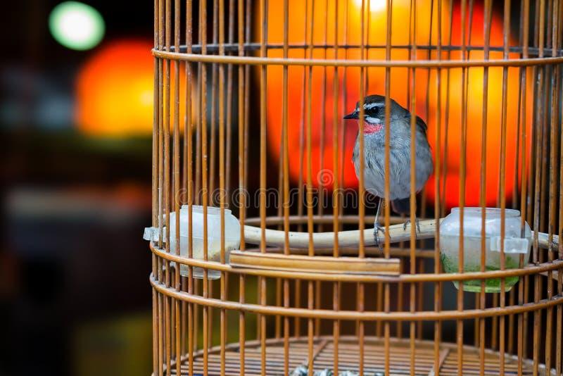 Птица в birdcage стоковое фото rf