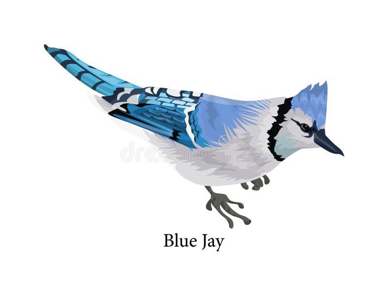 Птица голубого jay с красочным пером иллюстрация штока
