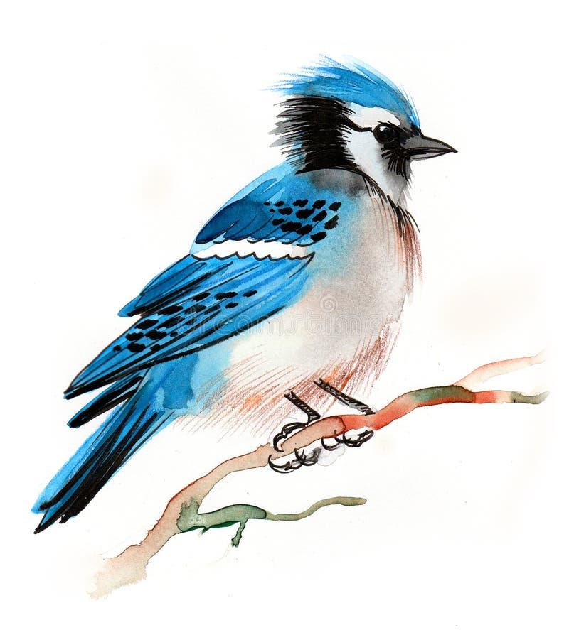 птица голубой jay иллюстрация вектора