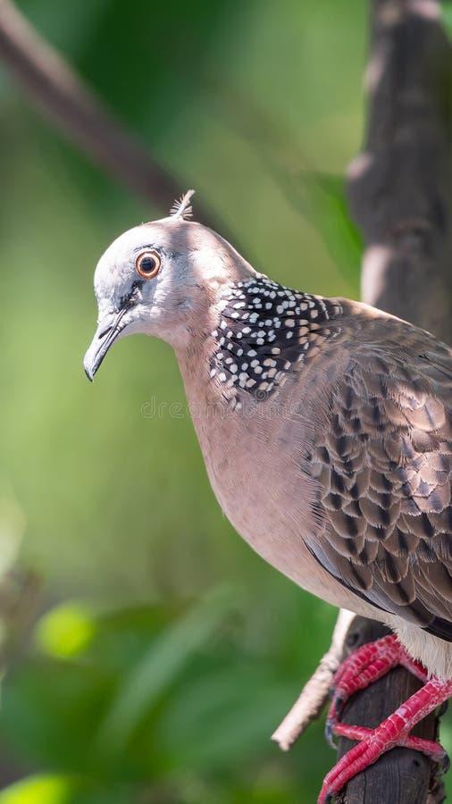 Птица (голубь, голубь или Disambiguation) в природе стоковое изображение rf