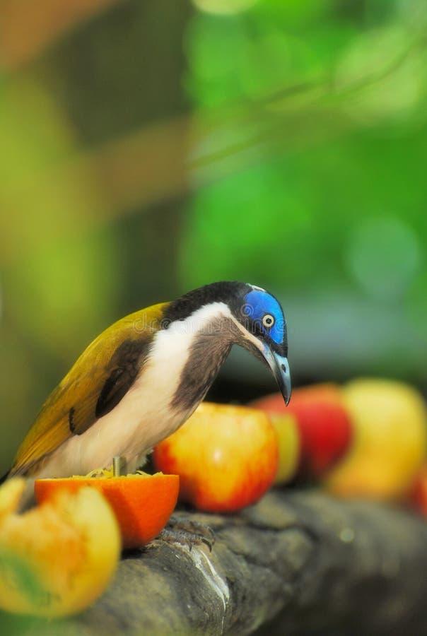 птица есть плодоовощи стоковая фотография