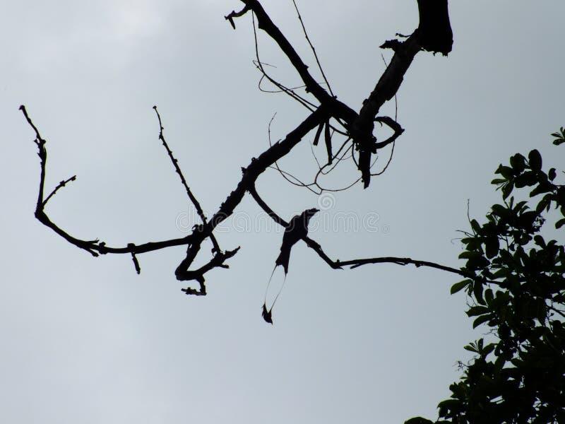 Птица замкнутая близнецом на верхней части дерева стоковые изображения rf