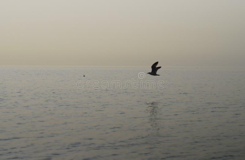 Птица и море стоковые изображения