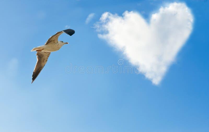 картинка с сердцем и чайкой мнению марка
