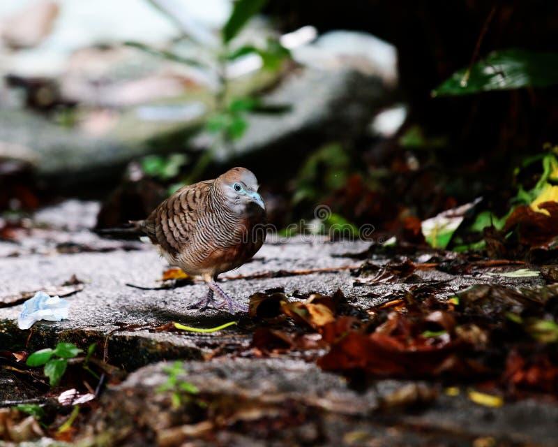 Птица идя на землю стоковая фотография