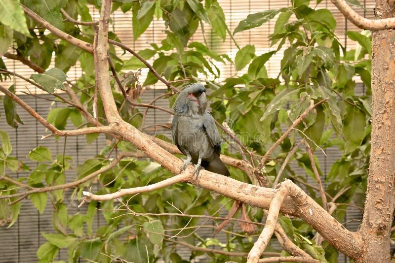 Птица какаду стоковое фото