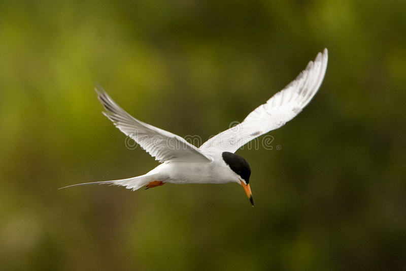 Птица летания стоковые фото